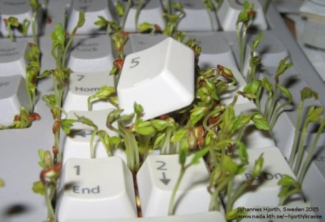 teclado florido